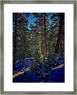 Framed Print featuring the photograph Forest Shadows by Dan Miller