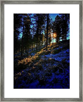 Framed Print featuring the photograph Forest Sunrise by Dan Miller