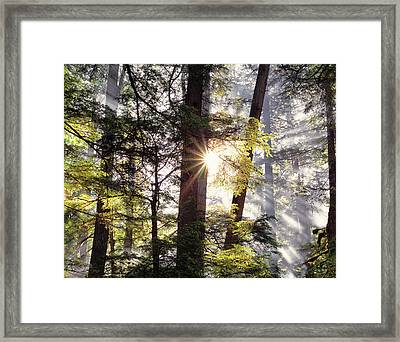 Forest Sunrise Framed Print by Leland D Howard