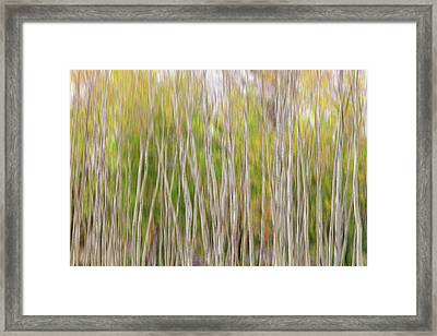 Framed Print featuring the photograph Forest Twist And Turns In Motion by James BO Insogna