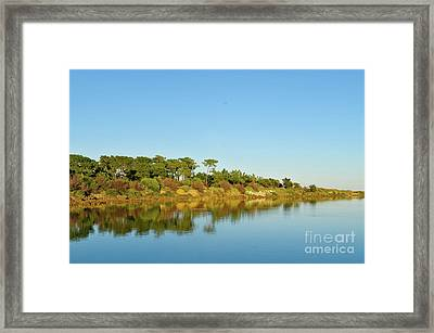 Forests Mirror Framed Print