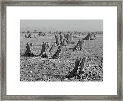Framed Print featuring the photograph Forrest by Davor Zerjav