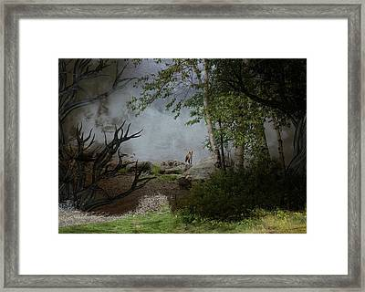 Fox On Rocks Framed Print