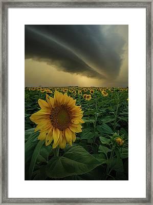 Framed Print featuring the photograph Frailty  by Aaron J Groen