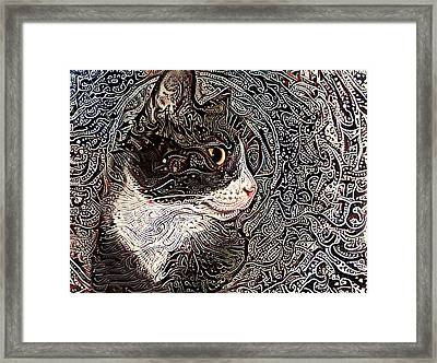 Franklyn The Tuxedo Cat Framed Print
