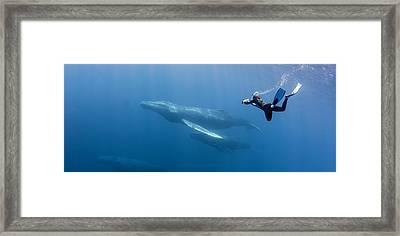 Freediving Framed Print by By Wildestanimal