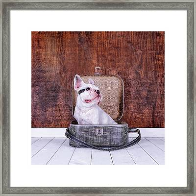 French Bulldog Puppy Inside An Old Framed Print by Maika 777