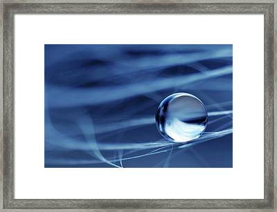 Framed Print featuring the photograph Fresh Blue by Michelle Wermuth