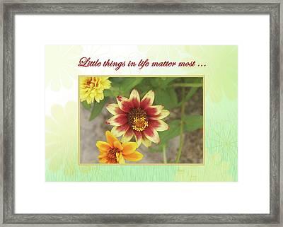 Friendship, A Smiling Indian Blanket Flower  Framed Print
