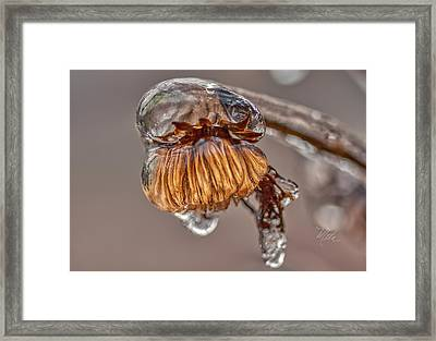 Frozen Blond Framed Print