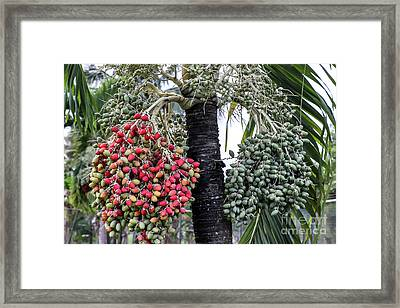 Fruity Palm Tree  Framed Print