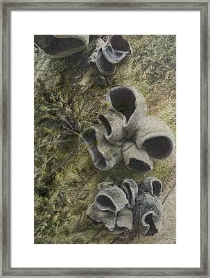 Fungi And Algae Framed Print