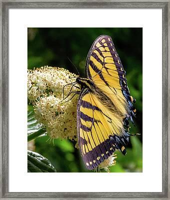 Fuzzy Butterfly Framed Print