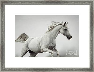 Framed Print featuring the photograph Galloping White Horse by Dimitar Hristov