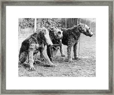 Gas Masks For Dogs Framed Print by Keystone