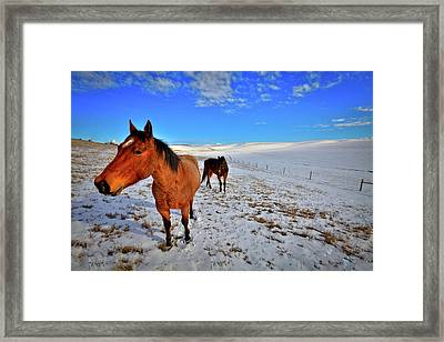 Framed Print featuring the photograph Geldings In The Snow by David Patterson