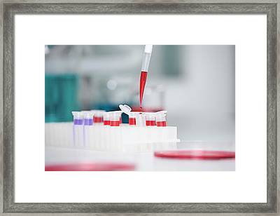 Germany, Bavaria, Munich, Pipette Framed Print by Westend61