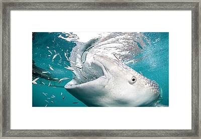 Getting Close Framed Print by By Wildestanimal