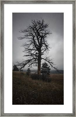 Framed Print featuring the photograph Ghostly Snag by Dan Miller