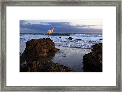 Giant Egret Framed Print