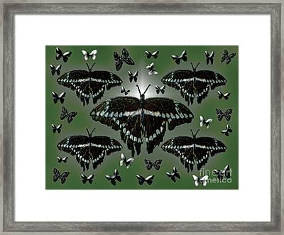 Giant Swallowtail Butterflies Framed Print