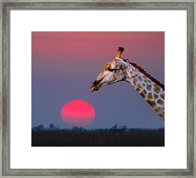 Giraffe Composite Framed Print