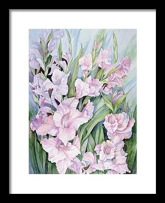 Gladiolus Framed Prints