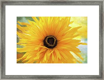 Framed Print featuring the photograph Gloriosa Daisy by Ann Jacobson
