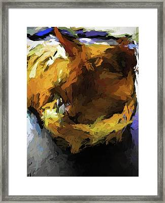 Gold Cat And The Shadow Framed Print