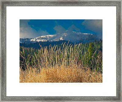 Gold Grass Snowy Peak Framed Print