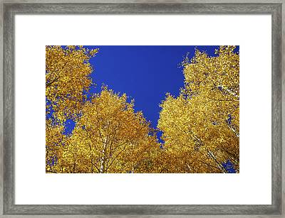Golden Aspens And Blue Skies Framed Print