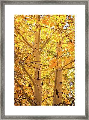 Golden Aspens In Grand Canyon, Vertical Framed Print