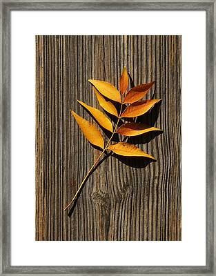 Framed Print featuring the photograph Golden Autumn Leaves On Wood by Debi Dalio
