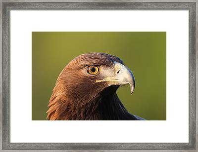 Golden Eagle 5151801 Framed Print