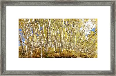 Framed Print featuring the photograph Golden Forest Fantasy by James BO Insogna