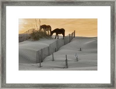 Golden Horses Framed Print