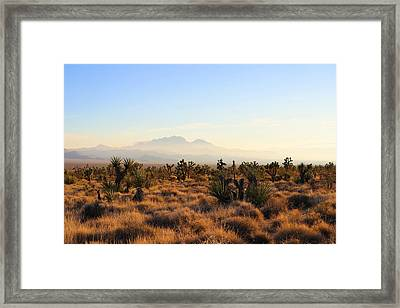 Golden Hour In Mojave Framed Print