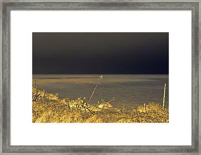 Golden Hues In The Night Framed Print