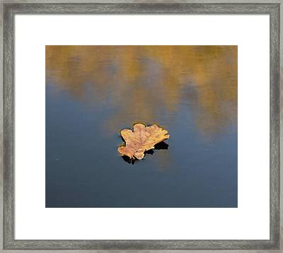 Framed Print featuring the photograph Golden Leaf On Water by Scott Lyons
