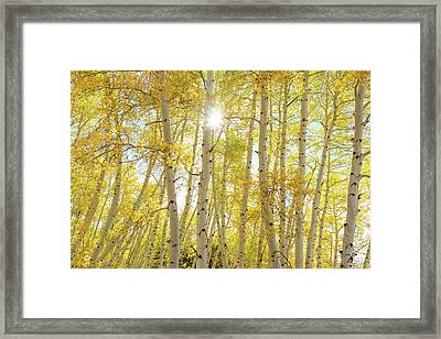 Framed Print featuring the photograph Golden Sunshine On An Autumn Day by James BO Insogna