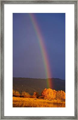 Golden Tree Rainbow Framed Print