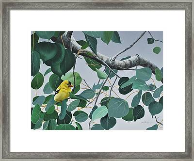 Framed Print featuring the painting Goldfinch And Aspen by Peter Mathios