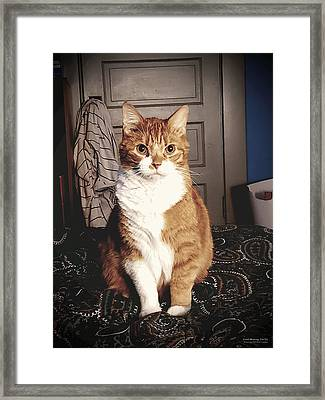 Good Morning, Get Up Framed Print by Brian Gryphon