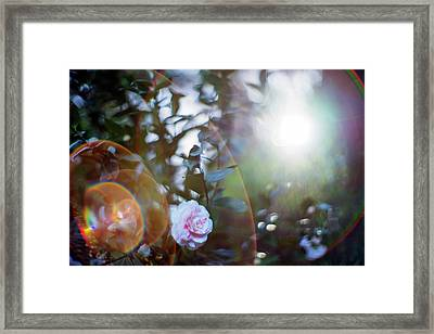 Framed Print featuring the photograph Good Morning Starshine, The Earth Says Hello by Quality HDR Photography