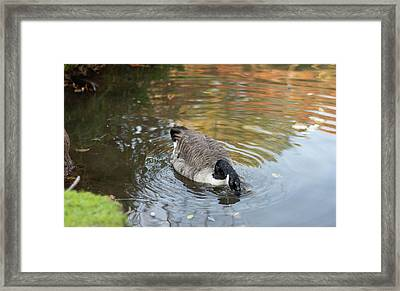 Framed Print featuring the photograph Goose Head In Water by Scott Lyons