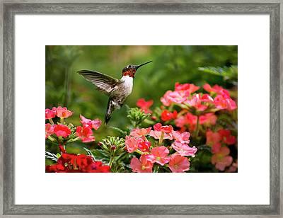 Graceful Garden Jewel Framed Print
