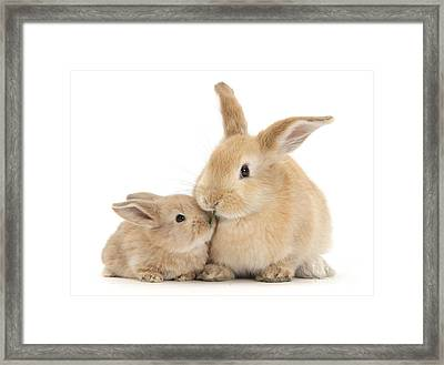 Framed Print featuring the photograph Grass Is For Sharing by Warren Photographic