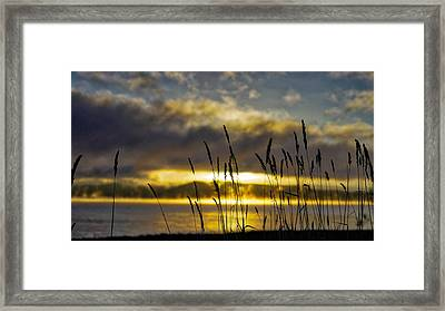 Grassy Shoreline Sunrise Framed Print