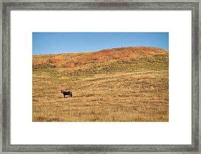 Grazing In The Grass Framed Print