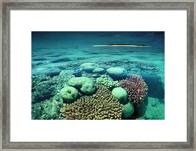 Great Barrier Reef In The Foreground Framed Print by Auscape / Uig